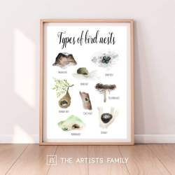 Bird Nests Types | Downloadable Prints | Watercolor | Montessori Educational Poster for Kids | Children Room | Boys Girls Children Rooms | Learning Painting | Illustration | English