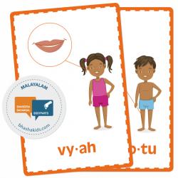 Malayalam മലയാളം - Body Parts Flashcards   School Resources   Montessori Flash Cards   Bilingual Education   Human Body   Teach Kids Malayalam   Language Learning Market